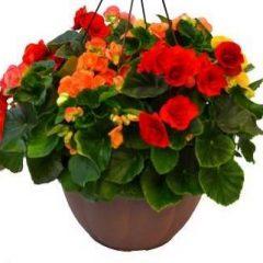 flower fundraiser